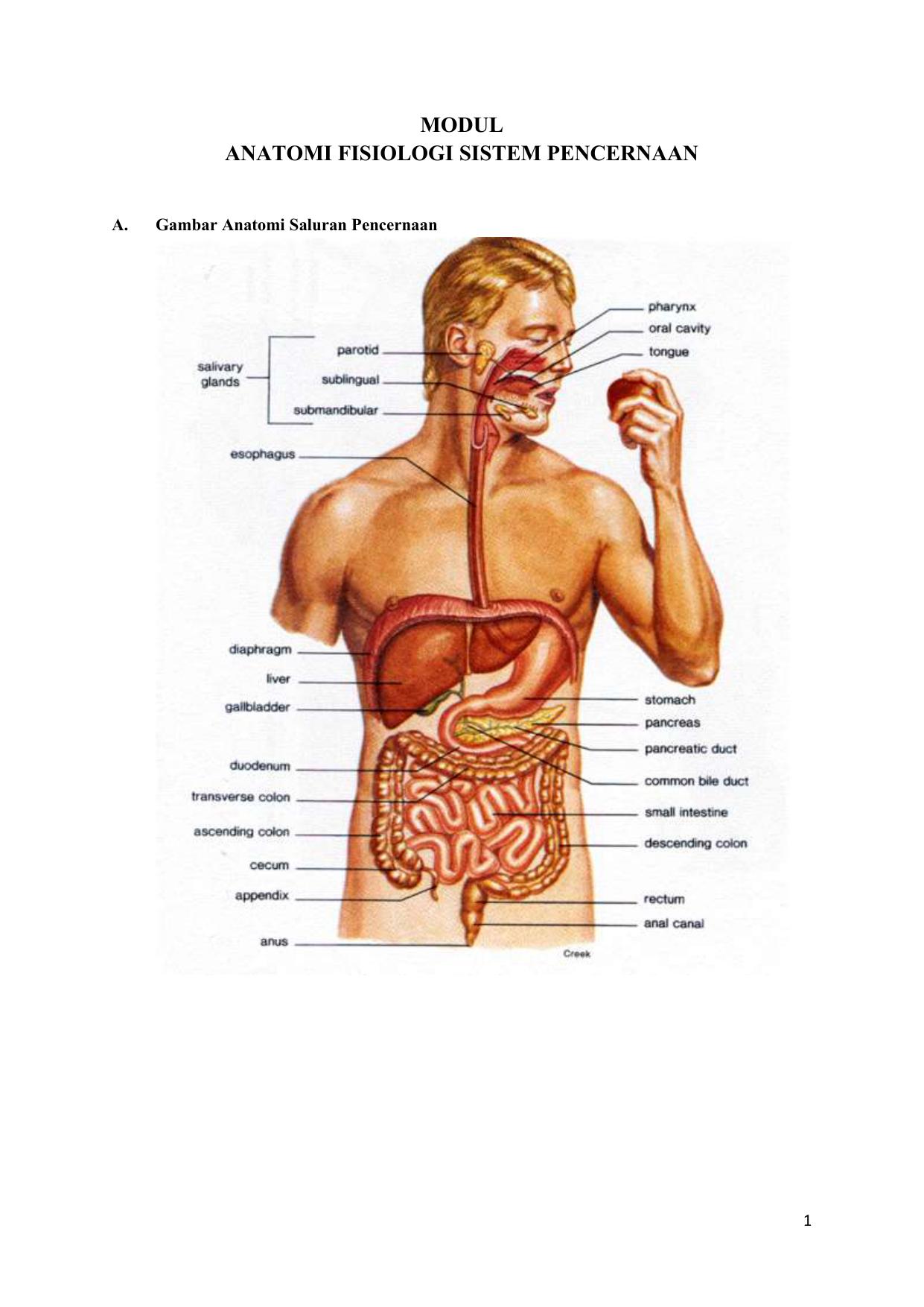 Modul Anatomi Fisiologi Sistem Pencernaan
