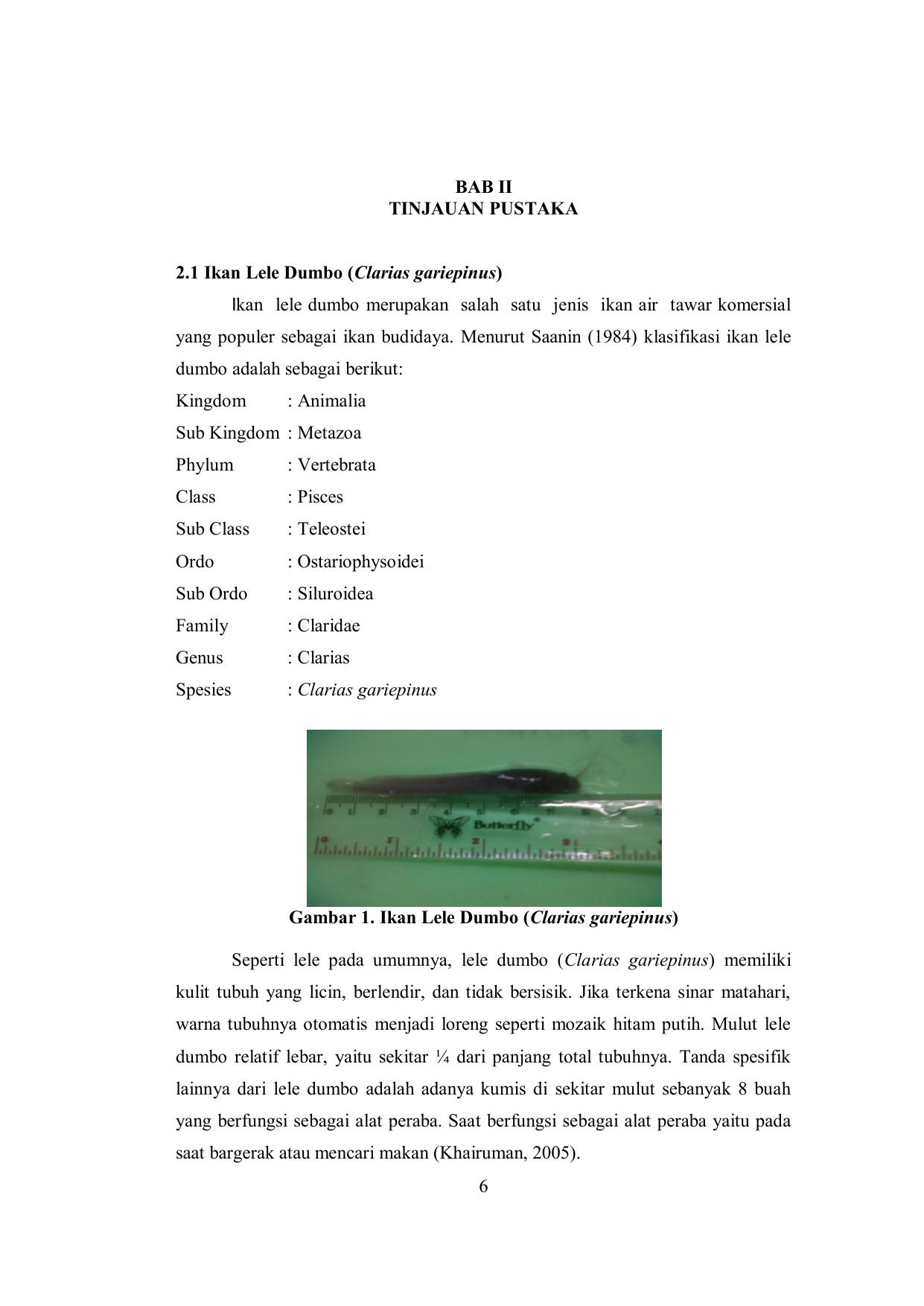 Unduh 6200 Gambar Usus Ikan Lele HD Terbaru