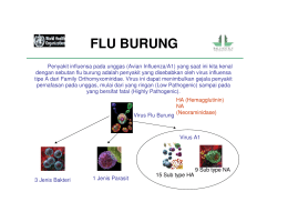 flu burung - Bali Hotels Association