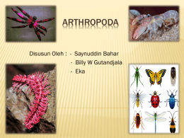 Arthropoda - WordPress.com