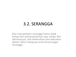 serangga - WordPress.com