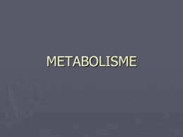 metabolisme - WordPress.com