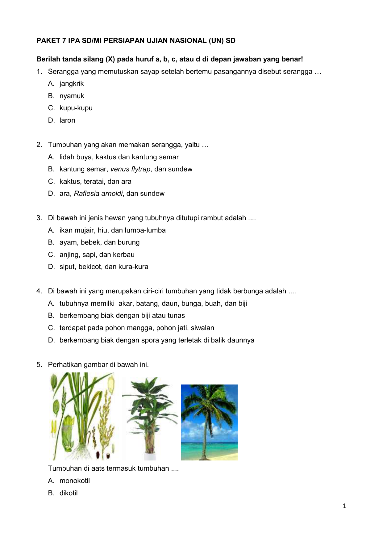 Download 60 Gambar Bunga Raflesia Dan Ciri Cirinya Paling Cantik HD