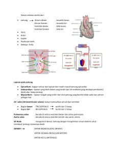 Review Anatomi dan Fisiologi Mata