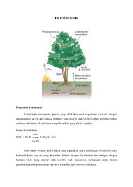 Proses Fotosintesis Pada Tanaman