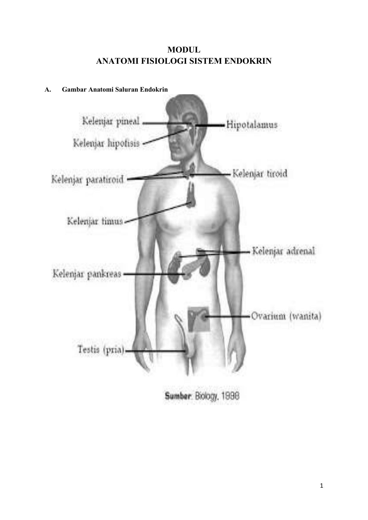 Modul Anatomi Fisiologi Sistem Endokrin