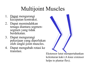Multijoint Muscles