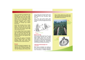 No.9 Air-leaflet-FINAL.cdr - World Agroforestry Centre