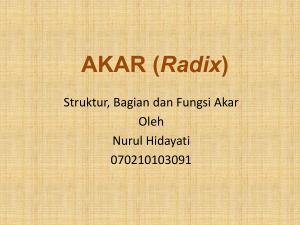 AKAR (Radix) - WordPress.com