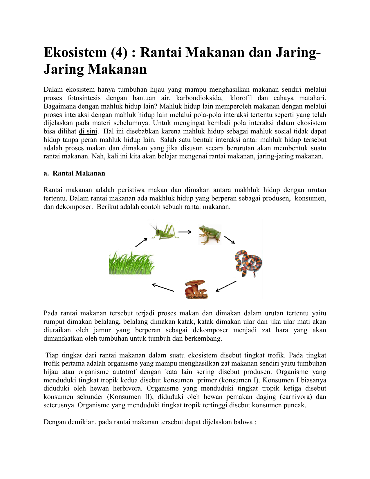 Ekosistem 4 Rantai Makanan Dan Jaring Jaring