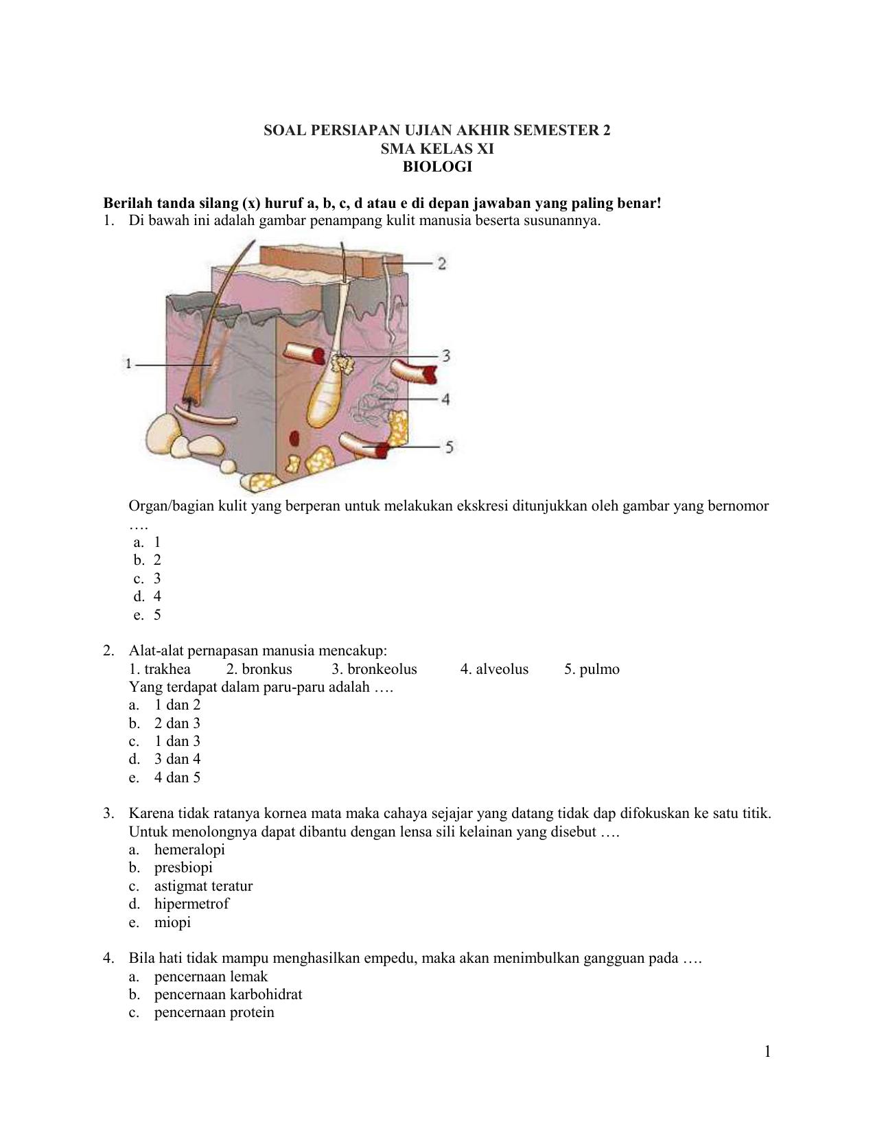 Contoh Soal Biologi Ekskresi Kelas 11 Beserta Jawaban ...