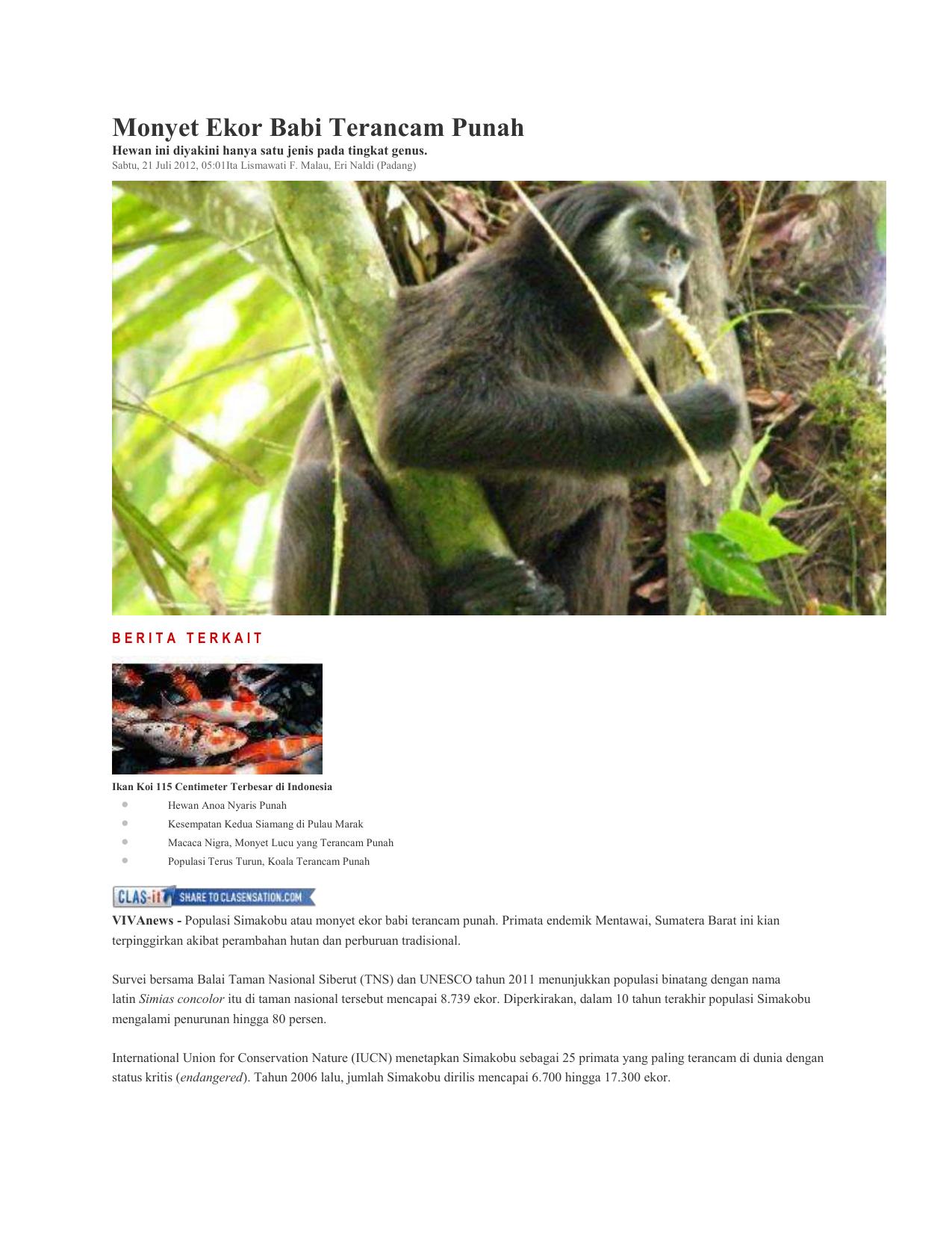 8700 Koleksi Contoh Gambar Hewan Anoa Gratis