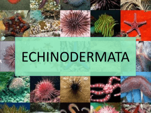 echinodermata - Hurricane Of Articles
