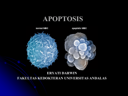 apoptosis - Repository Unand