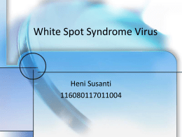white spot syndrome virus wssv experiment White spot syndrome is considered to be one of the most serious viral diseases of shrimp, and the causative organism has been identiwed as white spot syndrome virus (wssv.