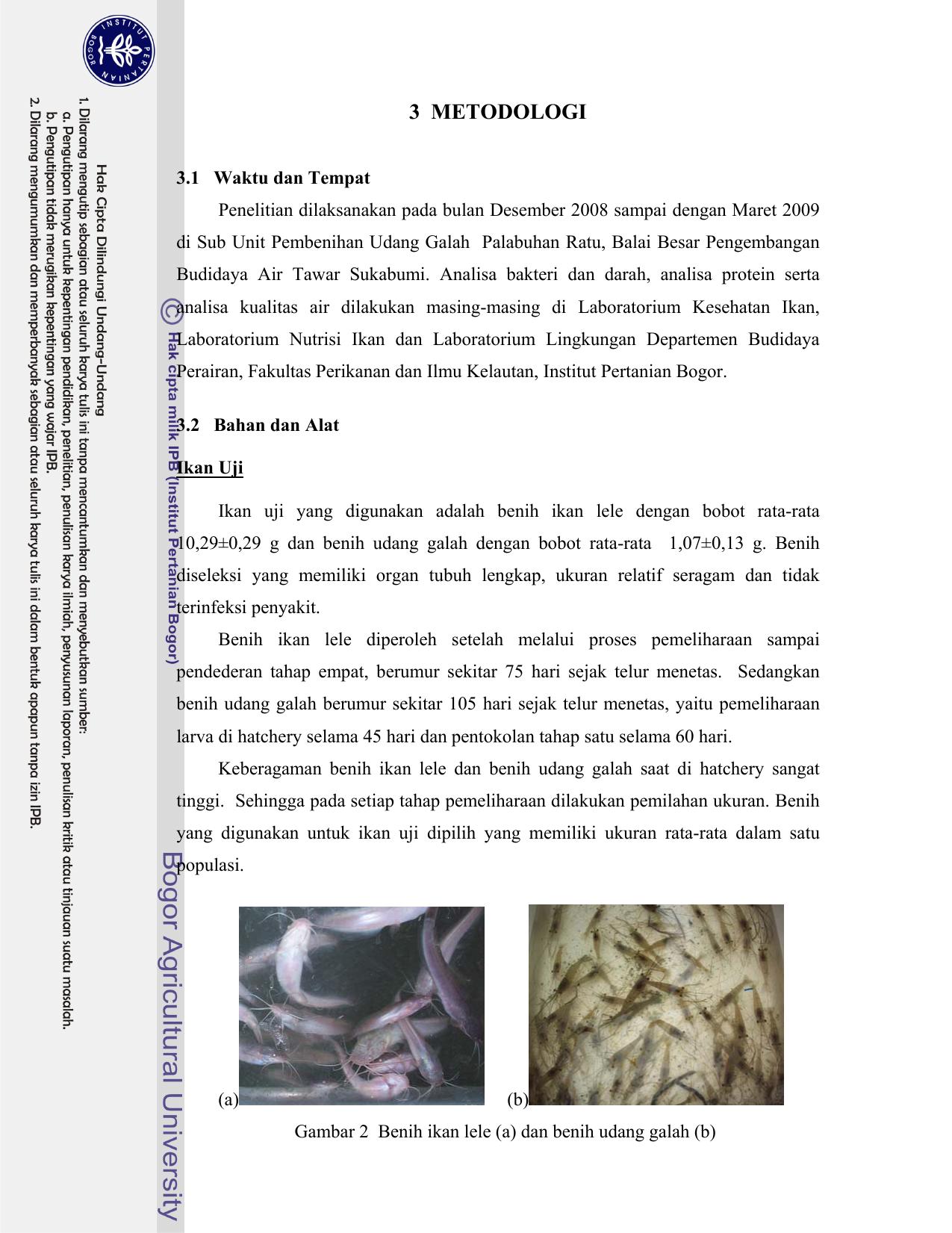 Konversi Limbah Budidaya Ikan Lele Clarias Sp