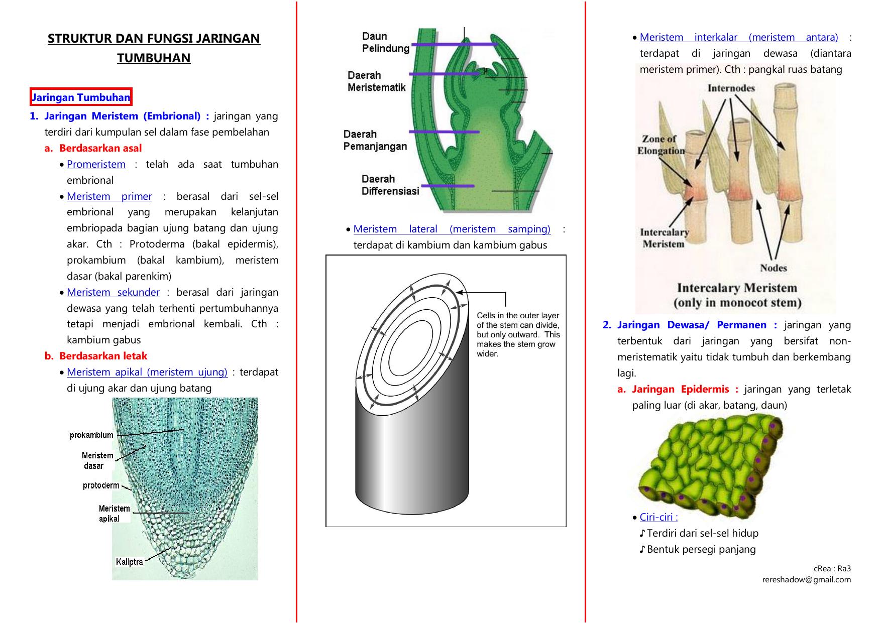 Struktur Dan Fungsi Jaringan Tumbuhan