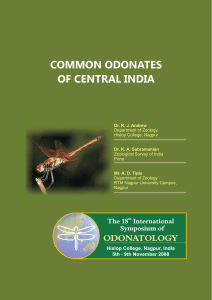 Common Odonates of Central India