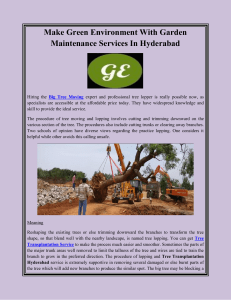 Make Green Environment With Garden Maintenance Services In Hyderabad